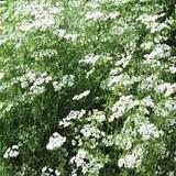 De a z les aromates condiments pices et herbes aromatiques - Les herbes aromatiques en cuisine ...